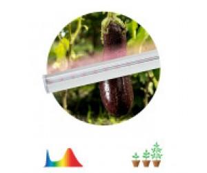 Светильник светодиодный LED T5-945 Fito 14Вт(для растений) ЭРА(580951)